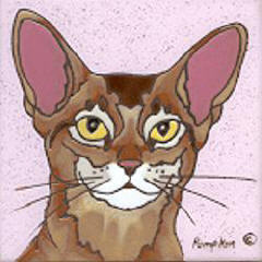 C17 - Abyssinian